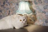 White persian cat near a lamp on a kitchen desk — Stock Photo