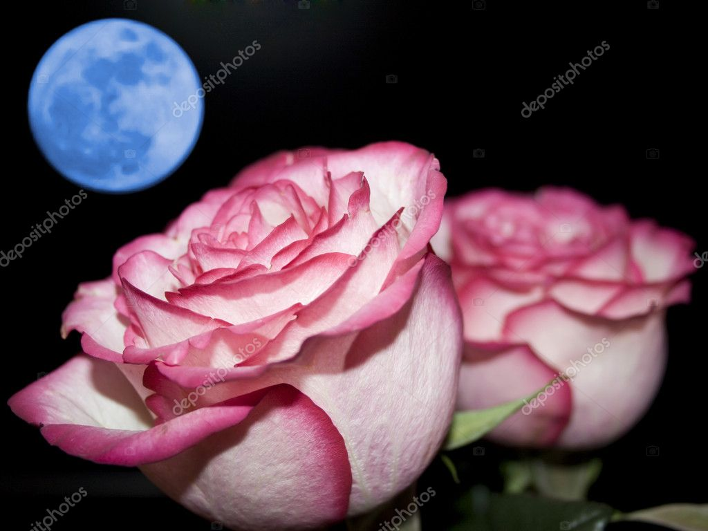 Planet of love - Valentine day event . Romantic beautiful rose on sky background  Stockfoto #5028212