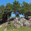 Pines on rock — Stock Photo