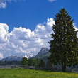 Stock Photo: Mountain meadow 1