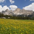 Stock Photo: Mountain meadow 3