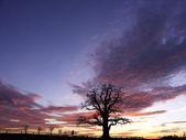 Oak in the sunset 2 — Stock Photo