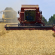 Stock Photo: Grain harvest 3