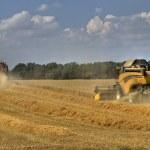 Grain harvest 4 — Stock Photo #5183657