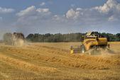 Grain harvest 4 — Stock Photo