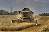 Grain harvest 2 — Stock Photo