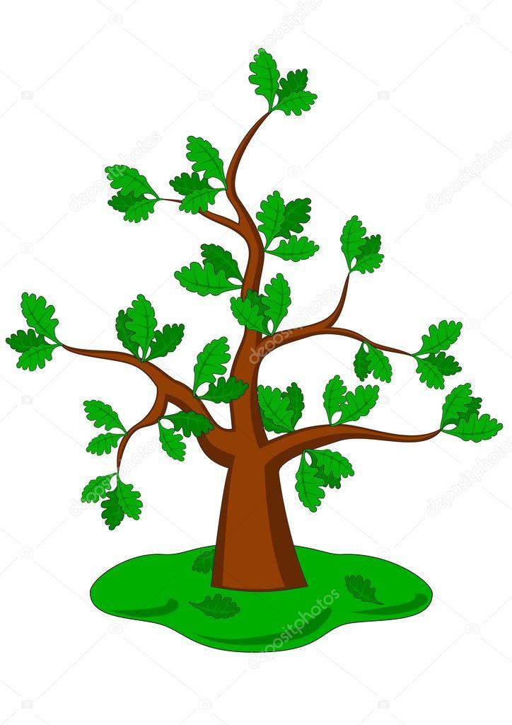 Oak Tree Cartoon Cartoon Oak on a White