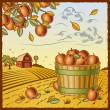 Stock Vector: Landscape with apple harvest