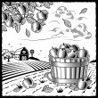 Stock Vector: Landscape with apple harvest black and white