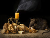 Still-life Mouse and Candle — Stockfoto