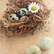 Grunge bird eggs in nest. - Stock Photo