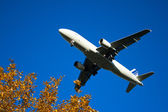 Plane with bushes — Stock Photo