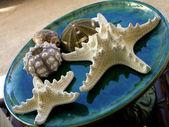 Starfish and shells — Stock Photo