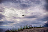 Seagull against menacing clouds — Stock Photo