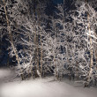 Trees in snowy woods. A wintry forest at night. - Stock Photo