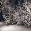 Trees in snowy woods. A wintry forest at night. — Stock Photo