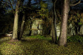 Autumn forest in night-time — Stock Photo