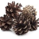 Pine cone — Stock Photo #5350979