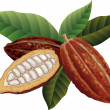 thumbnail of Cocoa beans