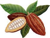 Cocoa beans — Stock Vector