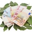 Conceptual photo - money resting on laurels — Stock Photo #5216676