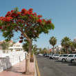 Stock Photo: Street of Playde las Americas