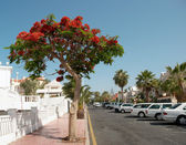 Street of Playa de las Americas — Stock Photo