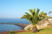Palm tree on Atlantic Ocean coast — Stockfoto