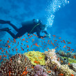 Diver on the reef — Stock Photo