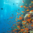 Shoal of anthias fish — Stock Photo