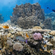 Coral scene on the reef — Stock Photo #5154288