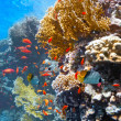 Coral scene - panorama — Stock Photo