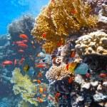 珊瑚场面-全景 — 图库照片 #5155045