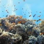 Coral scene - panorama — Stock Photo #5155130