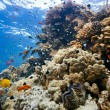 Coral scene on the reef — Stock Photo #5155387