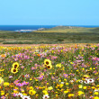 Field of colorful wild flowers — Stock Photo