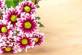 コピー スペースと美しいピンクの花 — ストック写真