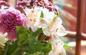 Hermosas flores rosadas con espacio de copia — Foto de Stock