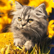 Cat on yellow background — Stockfoto #5149539