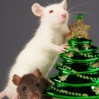 Rat on a grey background - Stock Photo