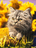 Cat on a yellow background — Stock Photo