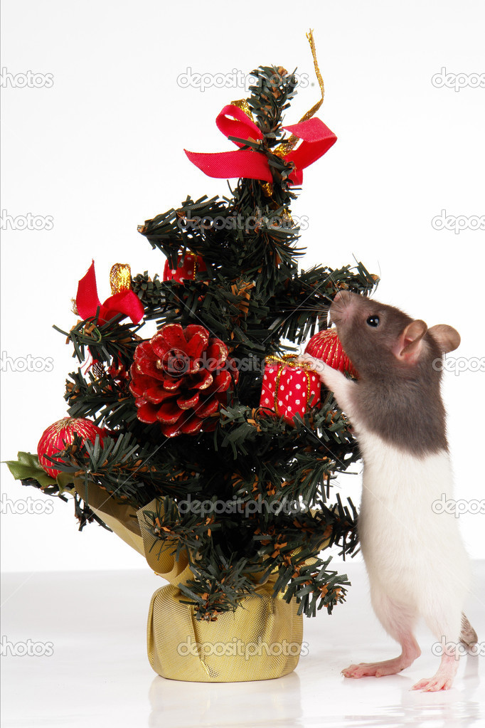 Rat on a white background                                — Stock Photo #5149737