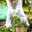 Stock Photo: Pulling weeds