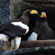 Stock Photo: Two eagles