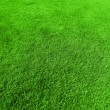 Green grass background - Photo