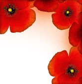 Red poppy border — Stock Photo