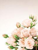 Fresh roses border — Stock Photo