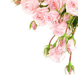 Fresh roses border — Stock Photo