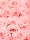 Pink roses background — Stockfoto