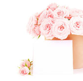 Pot of pink roses — Stock Photo